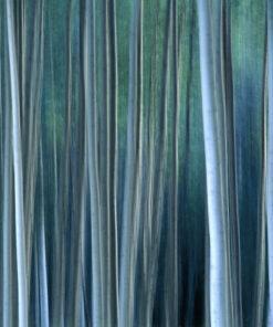 asp skog i kvällsljus lahall JPL000095