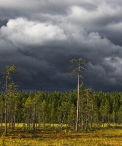 Hotfullt landskap. myr i finland