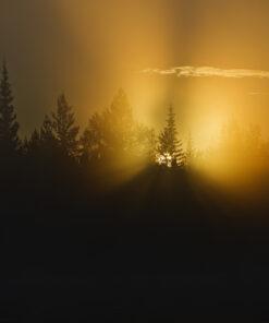 Soluppgång i dimma.
