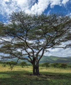 Fotokonst Jens C Hilner The Tree 2006, Tanzania